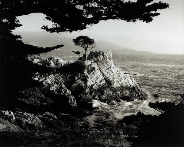 Rocky ocean coastline with a single tree growing out of an outcropping.