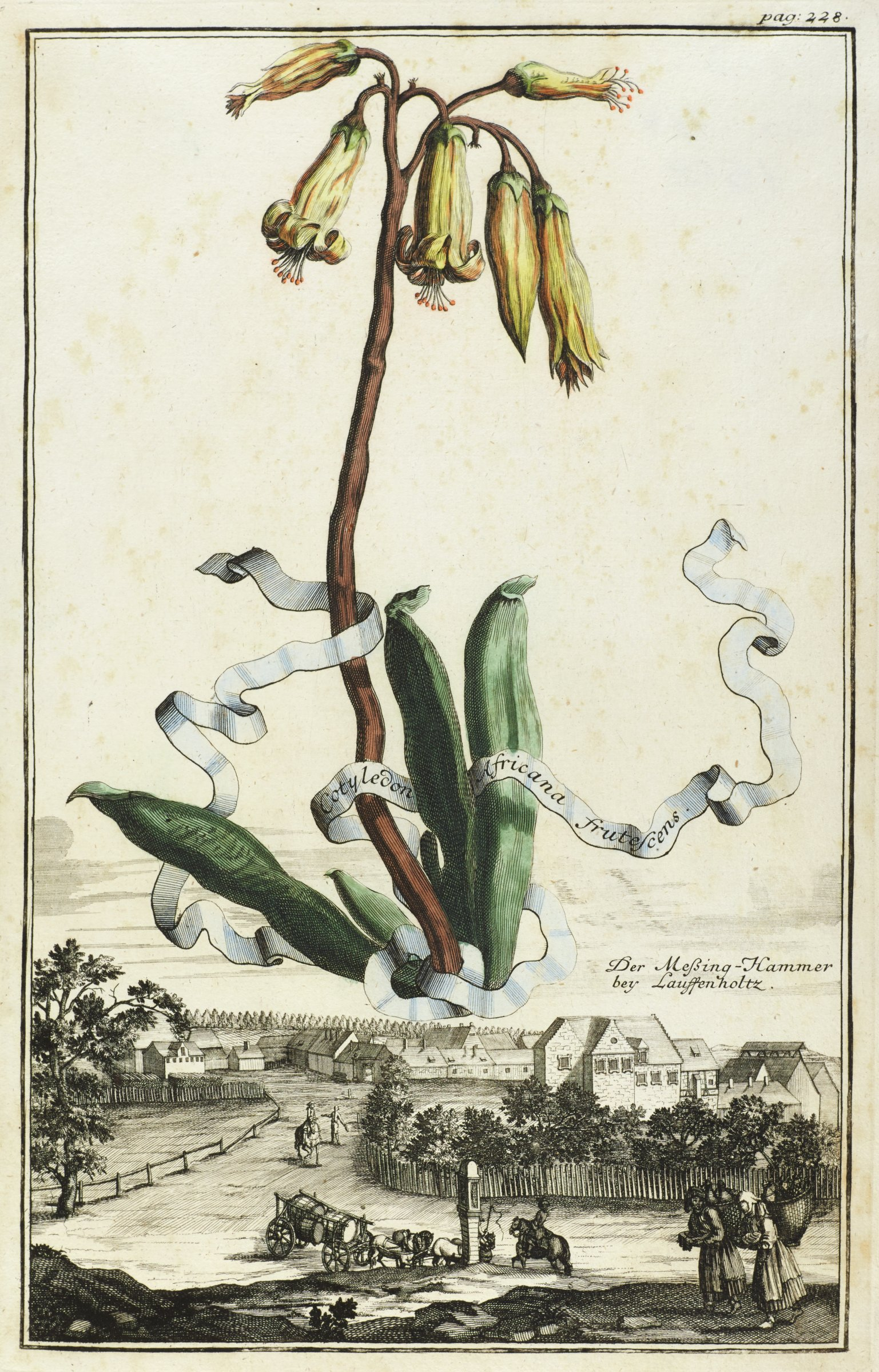 A large plant with yellow blossoms hovers above A townscape. The plant is hand-colored in watercolor.