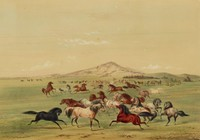 Wild Horses at Play, George Catlin, lithograph